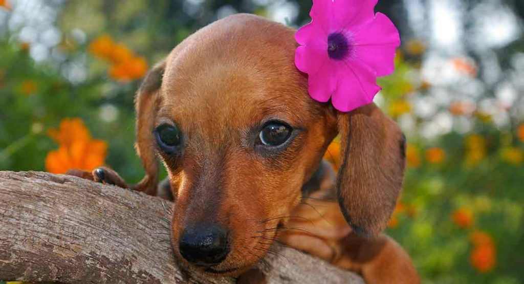 Cute Hawaiian name for your puppy