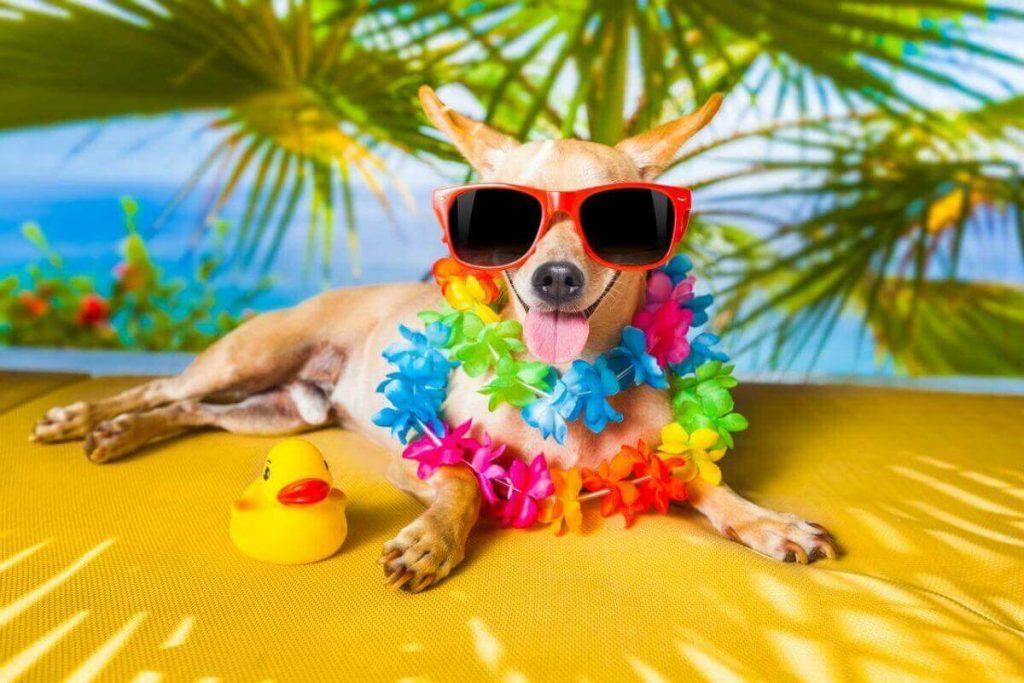 Hawaiian island names for dogs