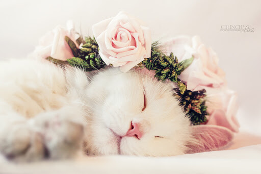 A lovely white female cat is sleeping