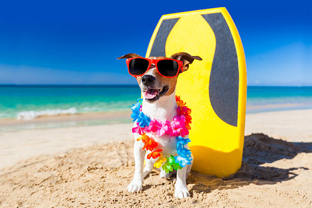 hawaiian dog name