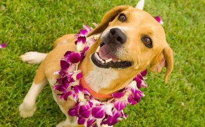 Best Hawaiian Dog Names