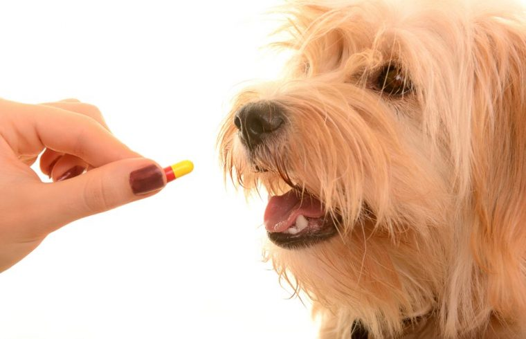 How to help dogs take pills