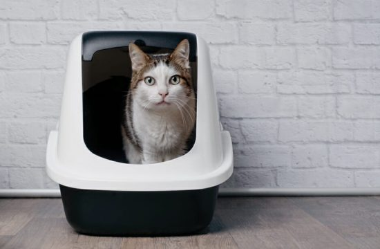 How to Stop Cats From Peeing Outside the Litter Box